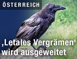 Задолбали голуби, Link_oest_letales_vergraemen_1k_f.2086420