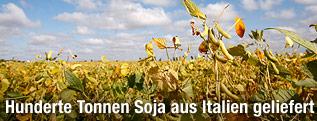 http://www.orf.at/static/images/site/news/20111250/biobetrug_italien_soja_oesterreich_2q_innen_r.2113973.jpg